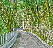 Victoria Peak path HDR by angeldragon069