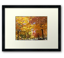 Under A Colorful Canopy Framed Print