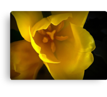The Translucency of Tulips Canvas Print