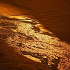 """Liquid Gold"" at Ocean Beach  by gaylene"