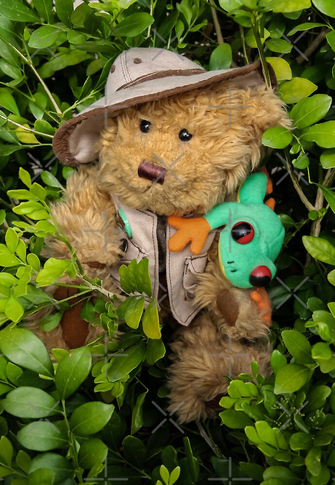 Mr. T. Bear On Holiday in The Rainforest!  by heatherfriedman