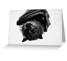 Black and White Flying Fox Greeting Card