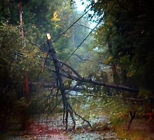 Storm Damage 2 by Nazareth