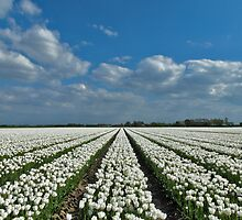 Tulipmania in Holland 4 by Adri  Padmos