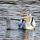 LOOK  It Floats Like Me   ~ Pelican With Empty Bottle ~ by Kym Bradley
