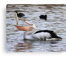 There Has To Be ONE Last Drop  ~ Pelican ~ Canvas Print
