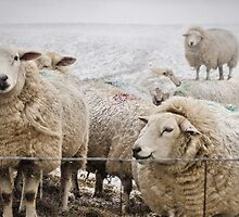 Sheep by JEZ22