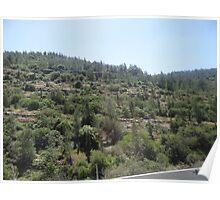 Israel Hills Poster