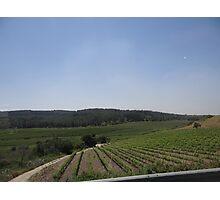 Israel, Vineyard Photographic Print