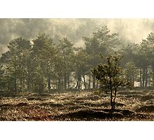 12.5.2013: Sunrise at the Swamp Photographic Print