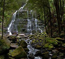 Nelson Falls - Tasmania by Steve Bass