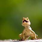 Garden Lizard by upadhyay