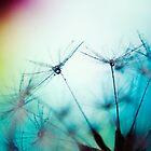 Dandelion II by Laura Williams