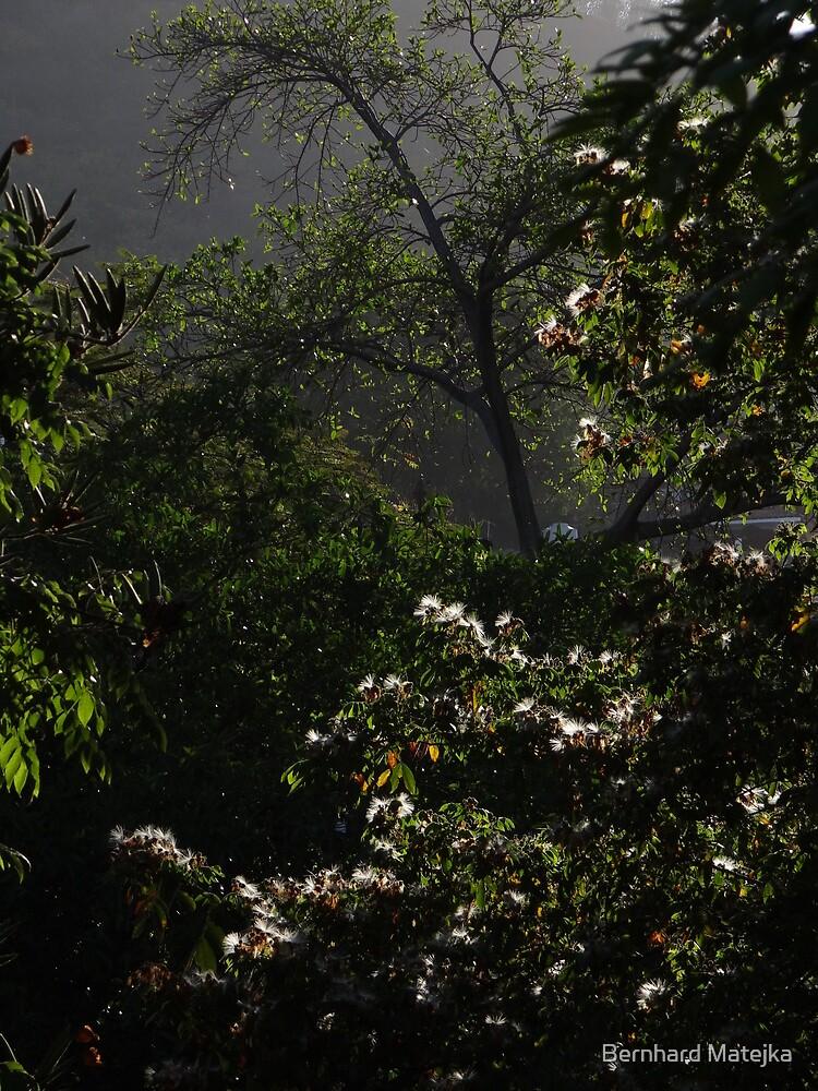 flashing up in the morning light - destellando el la luz de la mañana by Bernhard Matejka