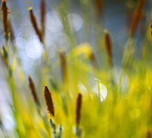 Yellow Grass with Water Highlights by rennaisance