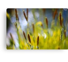Yellow Grass with Water Highlights Canvas Print