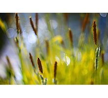 Yellow Grass with Water Highlights Photographic Print