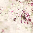 Dreaming of Springtime Blossom by Natalie Kinnear