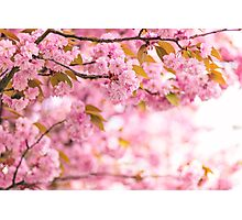 Blossom archway II Photographic Print