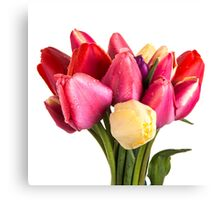 Beautiful Fresh Spring Tulips Canvas Print