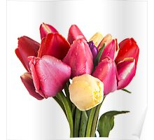 Beautiful Fresh Spring Tulips Poster