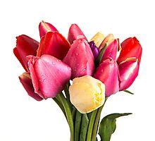 Beautiful Fresh Spring Tulips Photographic Print