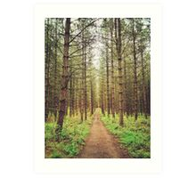 Long path in the woods Art Print