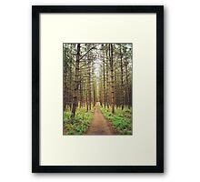 Long path in the woods Framed Print