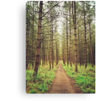Long path in the woods Canvas Print