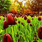 Tulips in the Park 2 by dawnandchris
