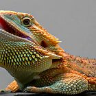 bearded dragon by clayton  jordan