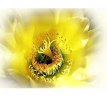 Cactus Glory Photographic Print