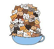 Mug Kittens Photographic Print