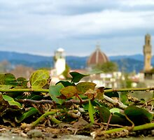 The duomo and the ivy by kejube