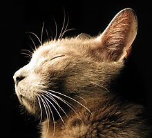 Cats by Chris Gudger