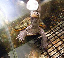 LIttle Baby Turtle by islandphotoguy