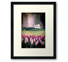 Two Swans Framed Print