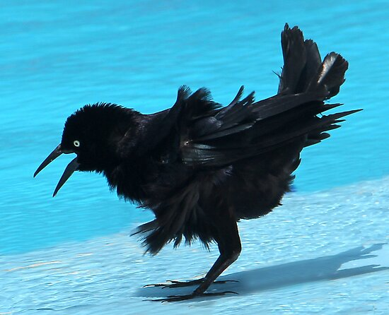 Cuba....a Totie bird captured around the swimming pool.  My hair looks such a mess :o) by vette