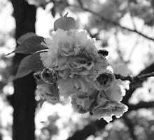 Botanic Garden, Brooklyn. by RaymondJames
