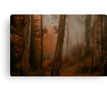Bushland Solitude  - Mount Wilson - NSW  - The HDR Experience Canvas Print
