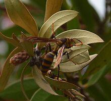 Hornet by paulbl