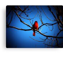 Proud Cardinal Canvas Print