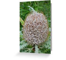Unknown plantlife Greeting Card