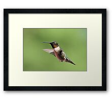 Hovering Hummer... Framed Print