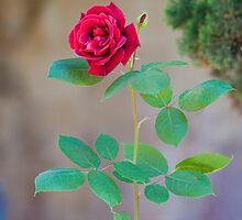 cloister rose by terezadelpilar~ art & architecture