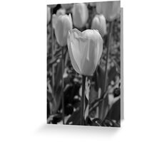 Botanic Garden, Brooklyn. Greeting Card