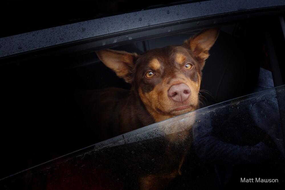 We met a mutt in Mittagong by Matt Mawson