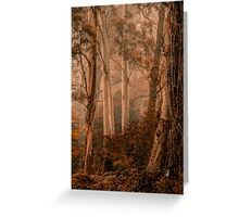 The Love of Trees   - Mount Wilson - NSW  - The HDR Experience Greeting Card
