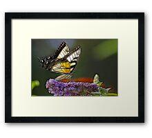 Butterfly in Fractalius Framed Print