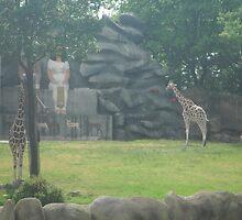 Introvert/Extrovert Giraffes by Ryan Eberhart